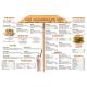 Menu Math: The Hamburger Hut (x, ÷)